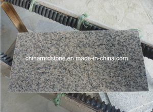 Granite calibrado Floor Tile para Flooring y Wall G664,